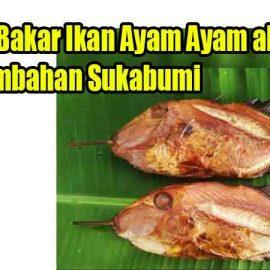 Resep Bakar Ikan Ayam Ayam ala Pangumbahan Sukabumi