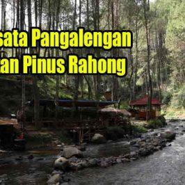 Wisata Pangalengan Hutan Pinus Rahong