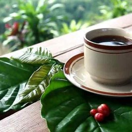 kampung kopi malabar pangalengan, kampung kopi malabar, kampung kopi, kopi malabar pangalengan, kopi malabar