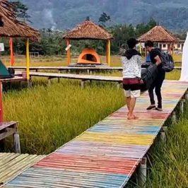Wisata Unik : Camping Di Sawah Sambil Menikmati Hutan Gunung Leuser