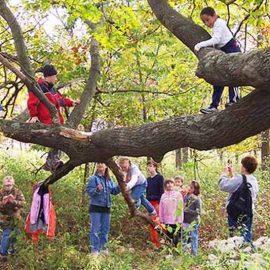 Memeluk Pohon Bantu Atasi NDD (Nature Deficit Disorder)